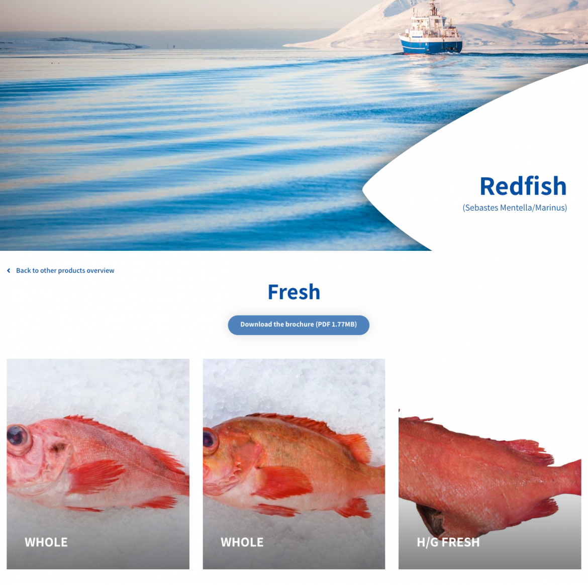 redfish-ice-fresh-seafood-wwwicefreshis.png